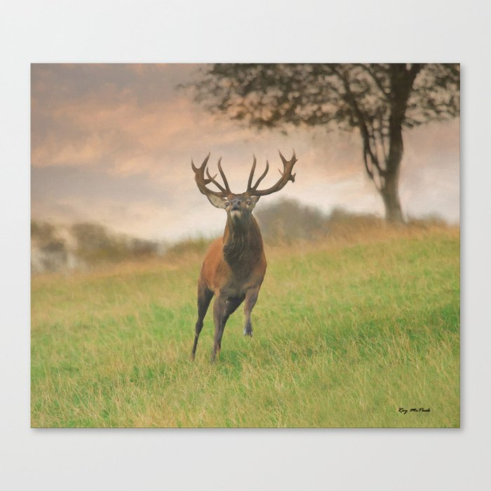Charging Stag Canvas Print