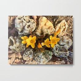 Spring flowers in the rock garden Metal Print