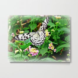 The Common Mime Butterfly on flowers Metal Print