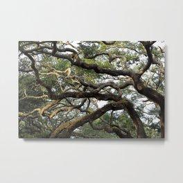 Live Oak Tree Metal Print
