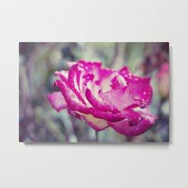 Magenta Rose Metal Print