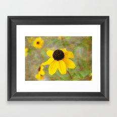Black-eyed Susan Framed Art Print