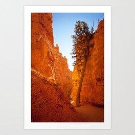 A Tree Grows Art Print