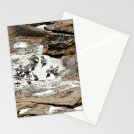 Sandpipers feeding in a tide pool Stationery Cards