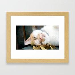 Peanut Framed Art Print
