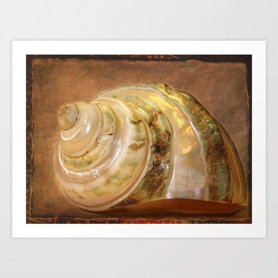 Muschel Art Print