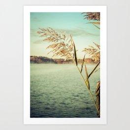 Golden Dreams Coastal Reed Botanical / Nature Photograph Art Print