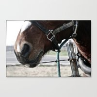 pony Canvas Prints featuring Pony by Lydia Helbig