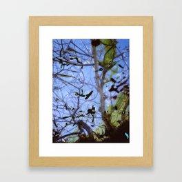 Imaginary Birds Framed Art Print
