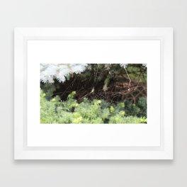 Spinning Webs Framed Art Print