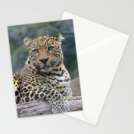 Aqua_Leopard_20180105_by_JAMColorsSpecial Stationery Cards