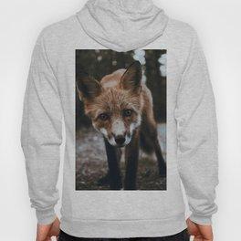Curious Fox / Alaska Hoody