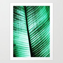 Maurelli Hard Green Banana Tree Leaf Art Print