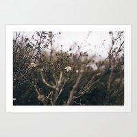 Bush Flowers, Tasmania Art Print