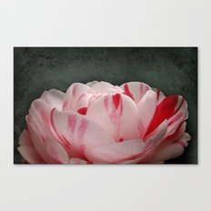 Camellia Variegation Canvas Print