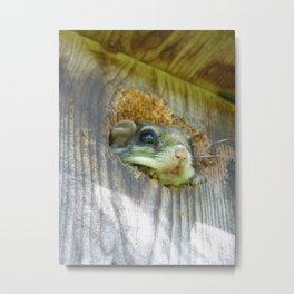 flying squirrel 2016 Metal Print
