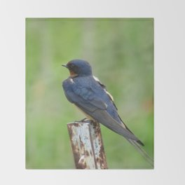 Barn Swallow at Jensen Nature Preserve Throw Blanket