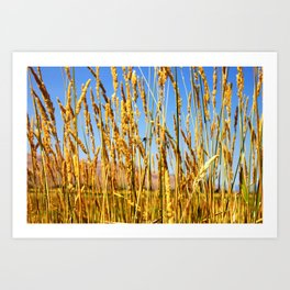 Dragonfly in tall dry grass Art Print
