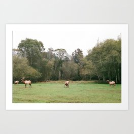 Elk in Humboldt Art Print