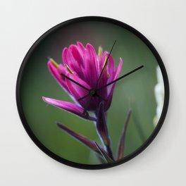 Pink Indian Paintbrush Wall Clock
