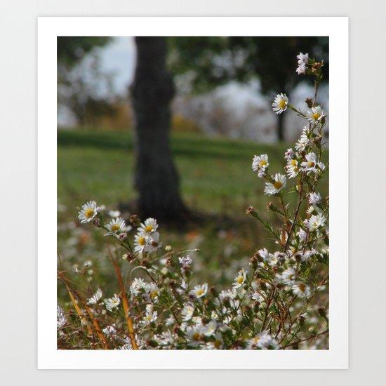 Midday Meadow Art Print