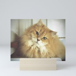 Siberian cat. Portrait of Mr. Cesare Mini Art Print