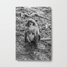 Toque Macaque Monkey Metal Print