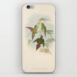 019 Wilhelmina Lorikeet psitteuteles wilhelminae4 iPhone Skin