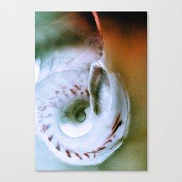 Sea Snail Portrait Canvas Print