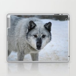 Lone wolf roams the Canadian Rockies Laptop & iPad Skin