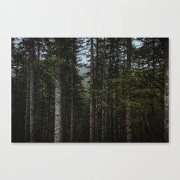 Oregon Trees Canvas Print