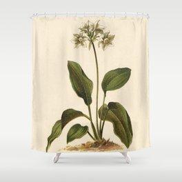 1800s Lithograph Amazon Lily, Eucharis Amazon Grandiflora Flower Shower Curtain