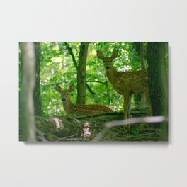 Two Fawns In Deep Woods Metal Print