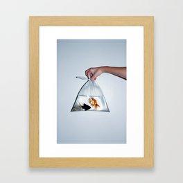 Fish. Framed Art Print