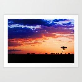 Zebras at Sunset, Masai Mara Art Print