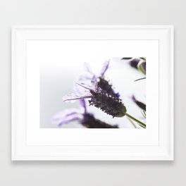 Provence violet lavander Framed Art Print