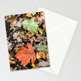 Autumnal leaves on the ground Stationery Cards