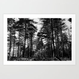 Landscape Black and white tree Photography - Dutch Forest National Reserve The Veluwe - Framed Canvas Art Print  Art Print