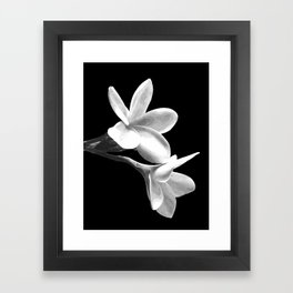 White Flowers Black Background Framed Art Print