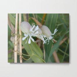 White Puffy Blooms Metal Print