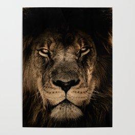 Lion Face Closeup Poster