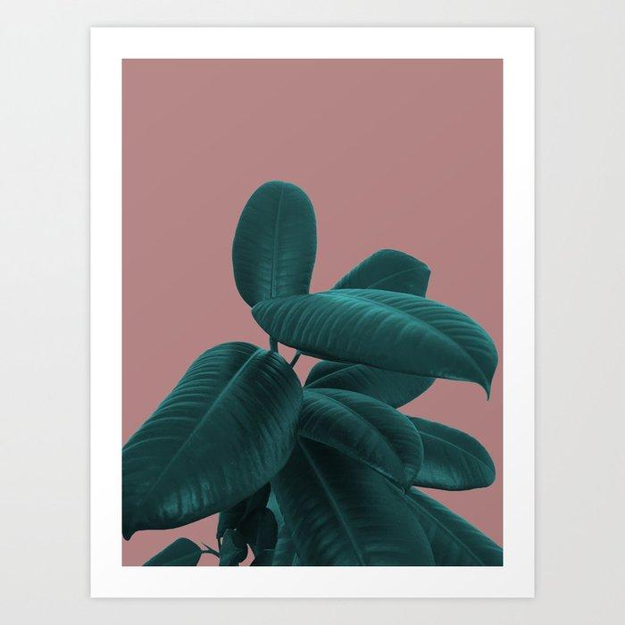 Ficus Elastica #9 #AshRose #decor #art #society6 Art Print