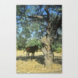 Aftenoon Shade Canvas Print