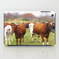 cows iPad Cases featuring Cows by AstridJN