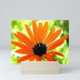 Solar orange daisy flower Mini Art Print