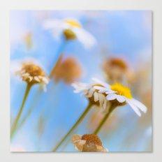 Daisies on Blue Canvas Print