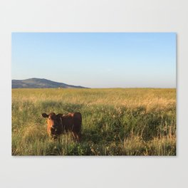 Cow in field Canvas Print