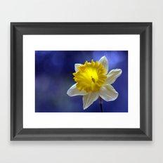 Daffodil in blue 9854 Framed Art Print