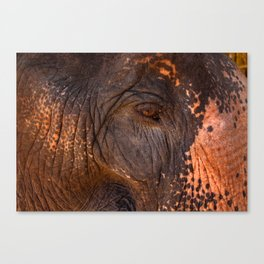 Gentle and Wise Canvas Print