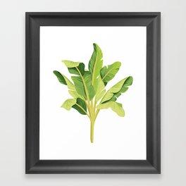 banana tree Framed Art Print